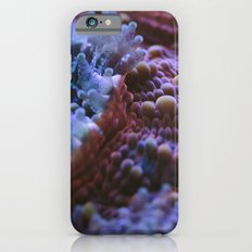 Acanthastrea Echinata Macro iPhone 6 Slim Case