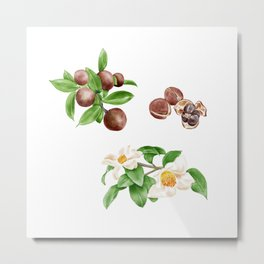 Watercolor Illustration of Camellia oil flowers and seeds Metal Print
