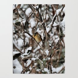 Friendly Freezing Poster