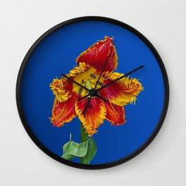 Flower tulip terry in spring Wall Clock