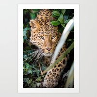 jaguar Art Prints featuring JAGUAR by Ylenia Pizzetti