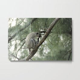 Monkey Itch Metal Print