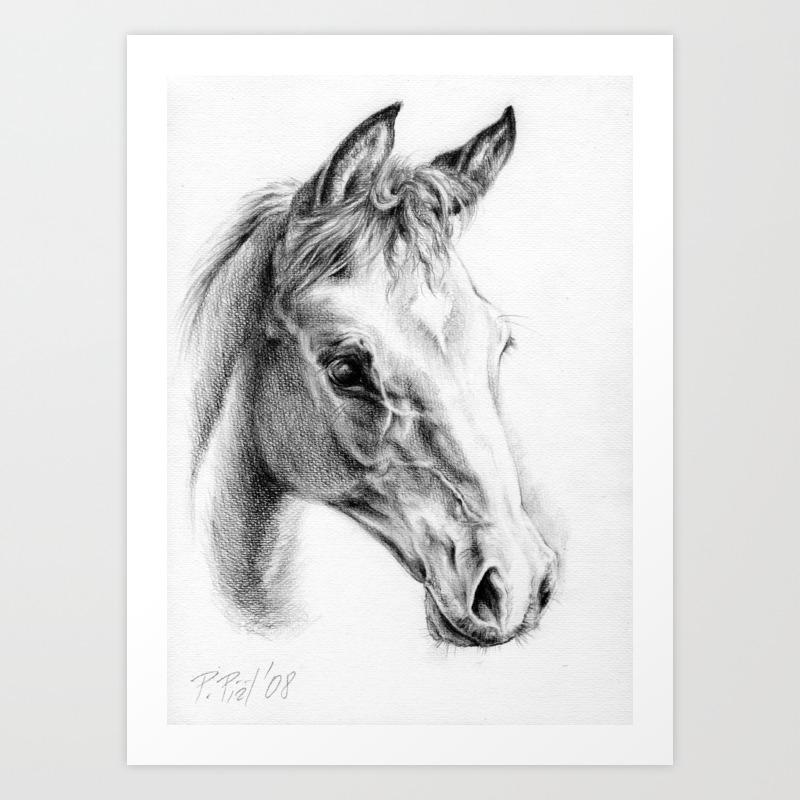 Foal horse portrait colt head graphite pencil drawing art print