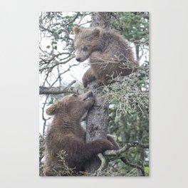 Brown Bear Cubs Canvas Print