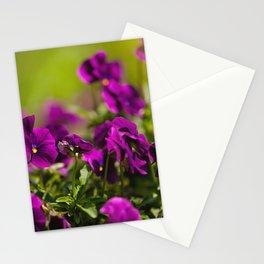 Purple pansies flowering bunch Stationery Cards