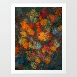 ColorFall Broccoli 4 Art Print