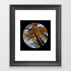 Tree from below Framed Art Print