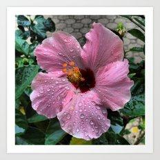 Raindrops on pink flower Art Print