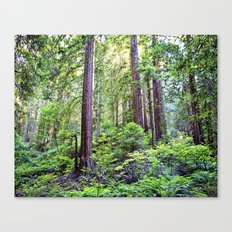 The Light Through the Woods Canvas Print