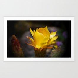 Yellow Cactus Flower Art Print