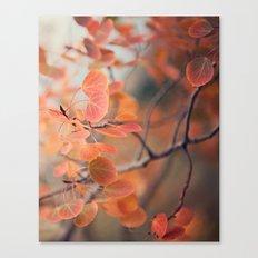 aspen amber Canvas Print