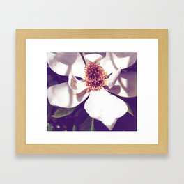 Beauty in a Flower Framed Art Print