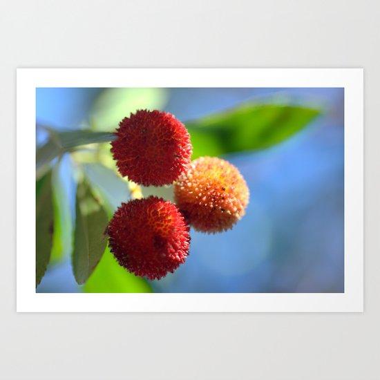 Strawberry tree fruits 8697b Art Print