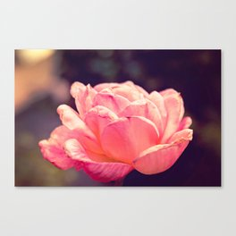 Fading Flower Canvas Print