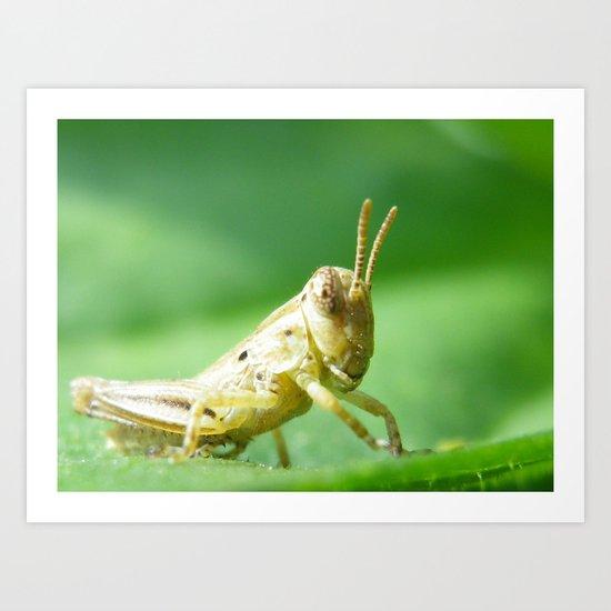 baby grasshopper Art Print