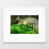 moss Framed Art Prints featuring Moss by 8daysOfTreasures