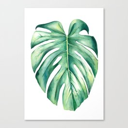 Costilla de Adán / Monstera deliciosa Canvas Print