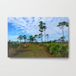 Florida Pine Flatwood Metal Print