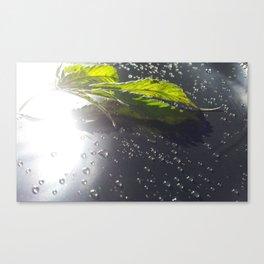 bl Canvas Print
