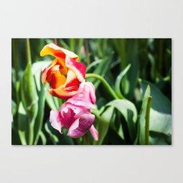 Twin Flowers Print-Amsterdam Keukenhof Flower Print Canvas Print