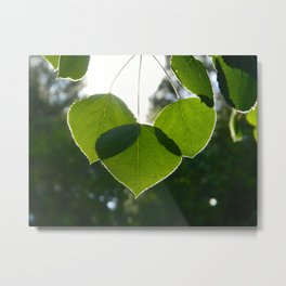 Mt. Lemmon Leaves Metal Print