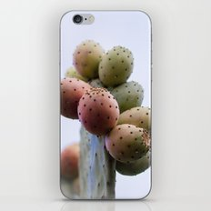Prickly Pear Fruits iPhone & iPod Skin