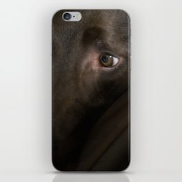 My Friend Chocolate Lab iPhone Skin