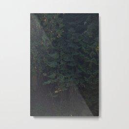 Pine Tree Photography Print Metal Print