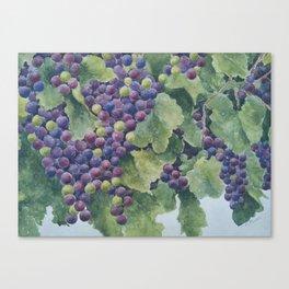 Napa Valley Grapes Canvas Print