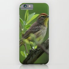 Palm Warbler iPhone 6s Slim Case