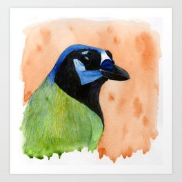 Green Jay Art Print