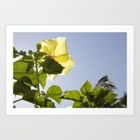 Hawaiian Flora Art Print