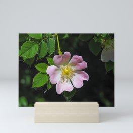 Dog Rose (Rosa canina) Mini Art Print