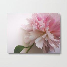 pink flower, the peony Metal Print