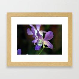 Lavendar Orchid Framed Art Print