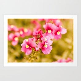 Vintage Nemesia Flowers Art Print
