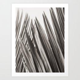 Sanur leaves / Nature photography art print grayscale - plant bali close up Art Print