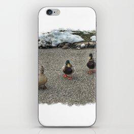 Friendly Ducks at Vander Veer Botanical Park iPhone Skin