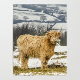 The Highland Cow Poster