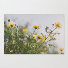 Under the light Canvas Print