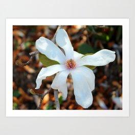 February Magnolia Art Print
