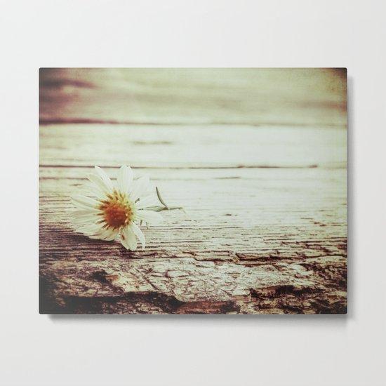 little daisy Metal Print