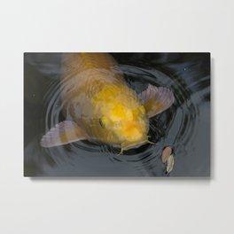 Yellow Koi Emerging in Ripples Metal Print
