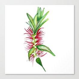 Australian Native Bottlebrush Flower Canvas Print