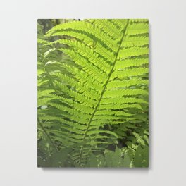 green fern leaf XXVI Metal Print