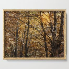 Forest in Autumn time Serving Tray