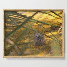 Hidden Rabbit Among Golden Palo Brea Flowers Serving Tray