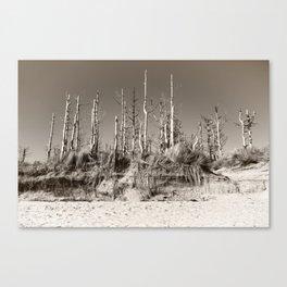 Dead Trees On The Beach Canvas Print