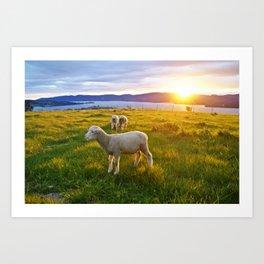 Lambs in the sunset Art Print