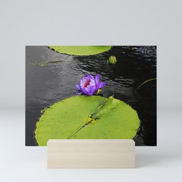 Dragonfly Dancing on a Lily Pad Mini Art Print